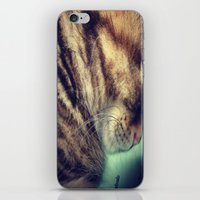 Sleepy Kitten iPhone & iPod Skin