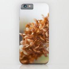 Winter Hydrangea II iPhone 6s Slim Case