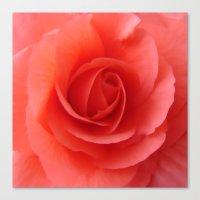 Rose Delicate Canvas Print