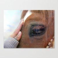 Horse healer Canvas Print