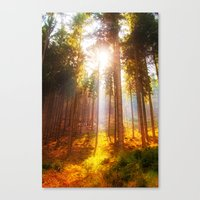 Sunshine forest Canvas Print