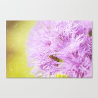 Lavender flower macro Canvas Print