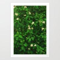 Greenery II Art Print