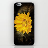 Beautiful Sunflower with Dark Brown Background iPhone & iPod Skin