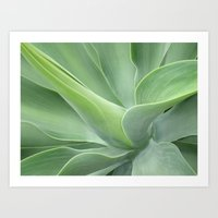 Green Agave Attenuata Art Print