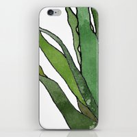 Aloe Vera - Watercolor Illustration iPhone & iPod Skin