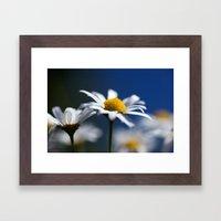 Marguerite Daisy3609 Framed Art Print