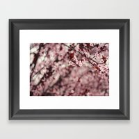 Pink Cherry Blossoms Framed Art Print