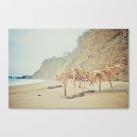 Canvas Print featuring Lo de Marcos, Nayarit by Jaime Lynn Photography