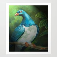NZ Native Pigeon Kereru Art Print