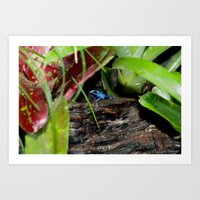 Poison Dart Frog- Young … Art Print