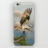 Osprey With Nesting Mate… iPhone & iPod Skin