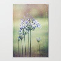 Summertime Beauty Canvas Print
