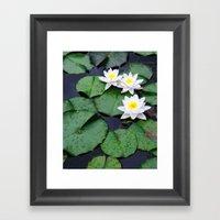 Lilly pad blossom  Framed Art Print