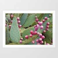 Desert Fruit Art Print