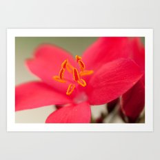 Pastel Flower 196 Art Print