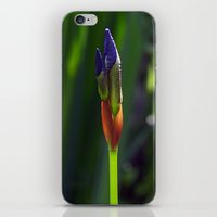 Sibirica 2 iPhone & iPod Skin