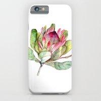 Protea Flower iPhone 6 Slim Case
