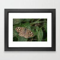 Speckled Wood Butterfly Framed Art Print