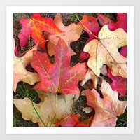 Maple Leaves In Fall Art Print