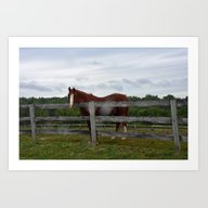 Art Print featuring Horse Time by BeachStudio