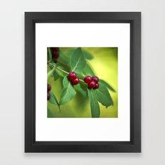 Red Honeysuckle Berries Framed Art Print