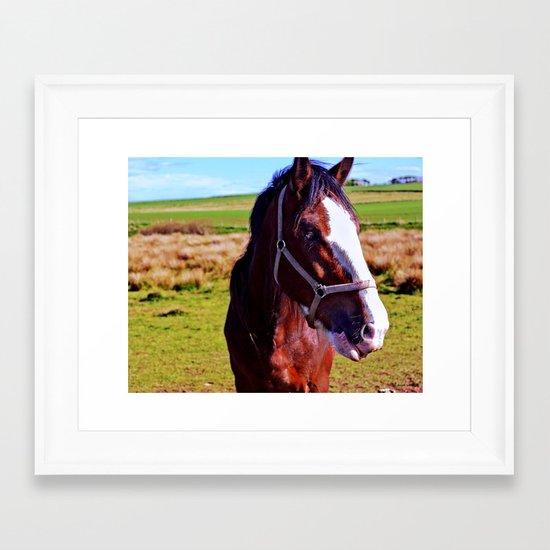 Scottish Clydesdale Framed Art Print