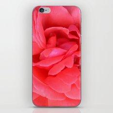 Pretty n Pink Rose iPhone & iPod Skin