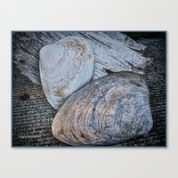 Driftwood And Sea Shells Canvas Print