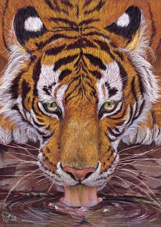 Thirsty Tiger Art Print