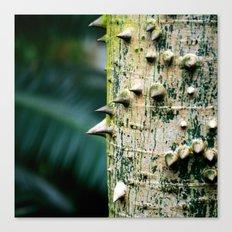 Thorny tree Botanical Photography Canvas Print