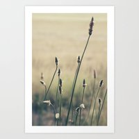 Afternoon Adventures Art Print