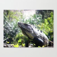 Soakin' up the Sun Canvas Print