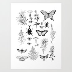Naturalist Art Print