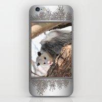 North American Opossum in Winter iPhone & iPod Skin