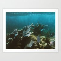 Mexican Caribbean Sealife Art Print