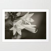Untitled Flower Monochrome Art Print