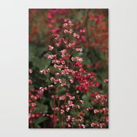 Little Red Flowers Canvas Print