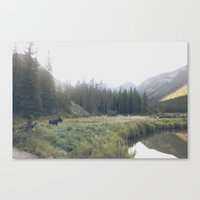 Morning Meadow Moose Canvas Print