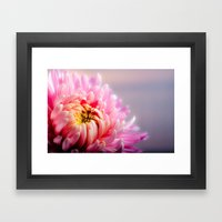 Pink Chrysanthemum Flower Framed Art Print
