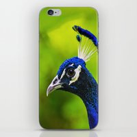 Pretty as a Peacock I iPhone & iPod Skin