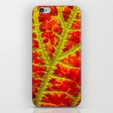leaf abstract I iPhone & iPod Skin