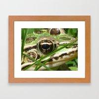 Northern Leopard Frog Framed Art Print