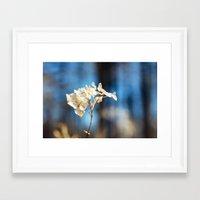 Summer's Ghost I Framed Art Print
