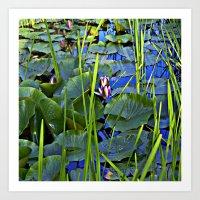 Blue AQUATIC DREAMS of Water Lillies Art Print
