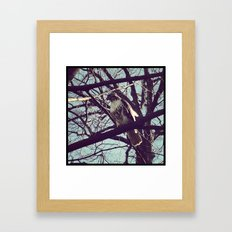 the falcon Framed Art Print