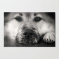 So Sleepy II - Dog Canvas Print