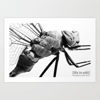 Dragonfly Profile Art Print