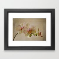 Yellow Spotted Orchid Framed Art Print
