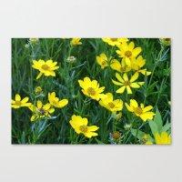 Prairie Flowers 2 Canvas Print